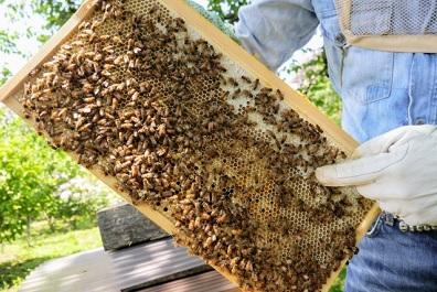 ミツバチの暮らし